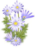 Bluedaisy120062
